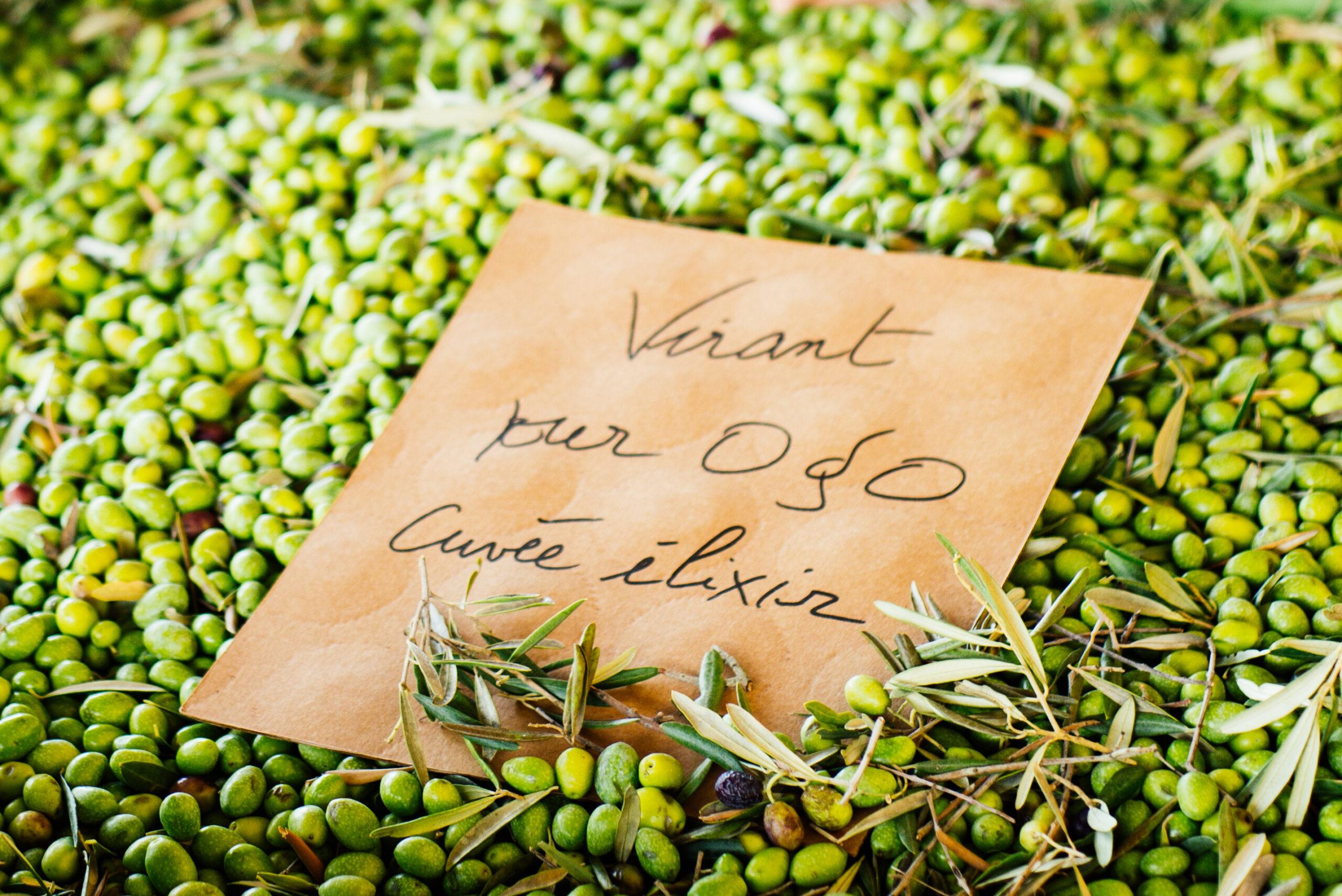 Oliviers & co olivenoliesmagning